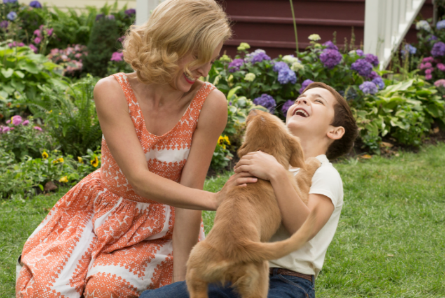 A Dog's Purpose, Bailey with Ethan